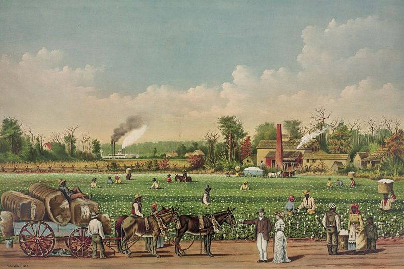 Cotton_plantation_on_the_Mississippi,_1884_(cropped)